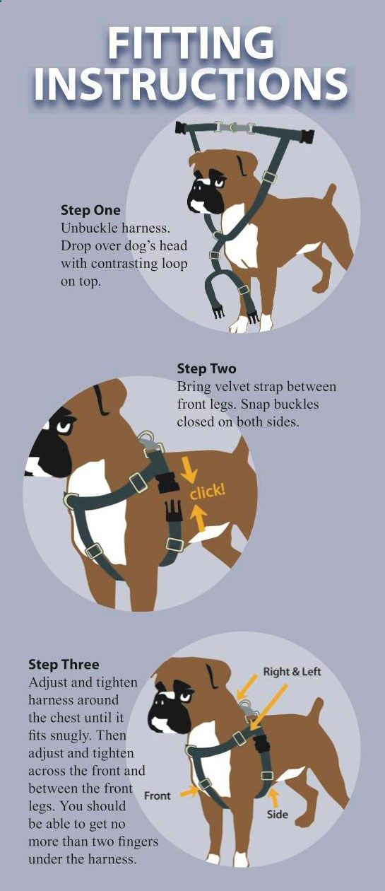 walk your dog with love harness instructions